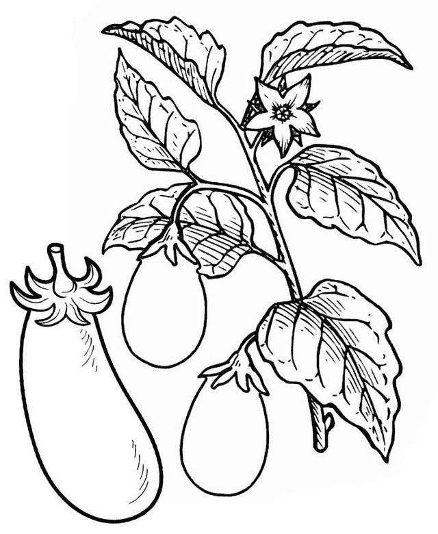 Eggplant Tree Vegetable Coloring Page Warna Gambar Pohon