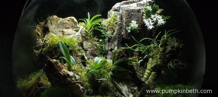 White Orchid BiOrbAir Terrarium Trial (part eight) - Pumpkin Beth
