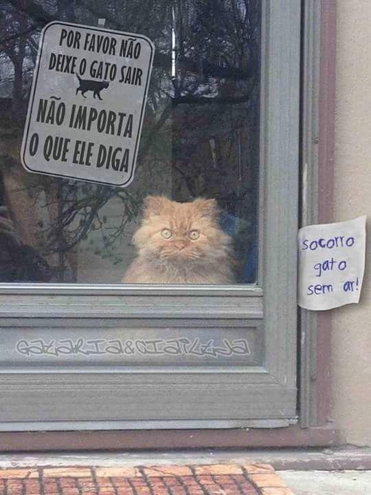 Esse gato  n é  de Deus.