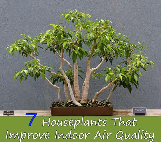 Best 20 indoor air quality ideas on pinterest air for Indoor plants for better air quality