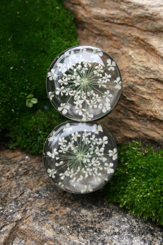 """Real Flower Plugs Queen Annes Lace in Resin for gauged ears custom size 9/16"""", 5/8"""", 3/4"""", 7/8"""", 1"""", 14mm, 16mm, 19mm, 22mm, 25mm. $30.00, via Etsy."""
