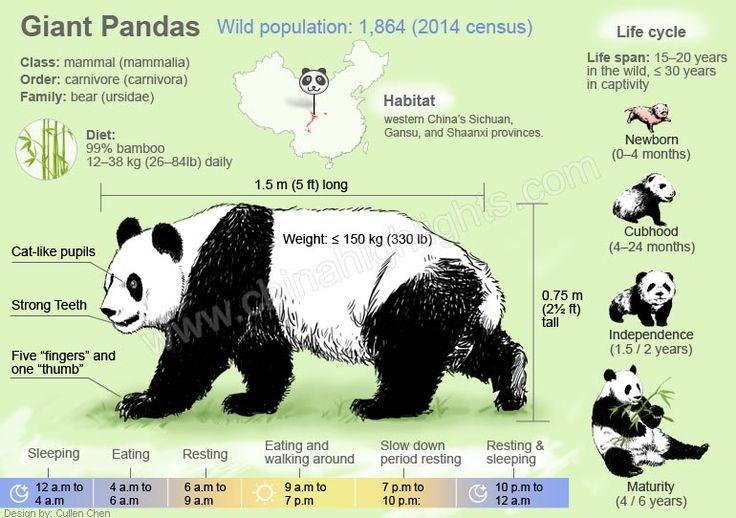 Life of  A panda