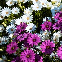 Quick Tip: 5 Great Garden Photography Tips