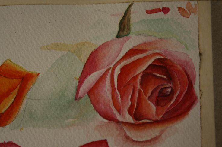 Rose in water colour