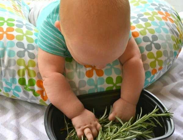 Des herbes à toucher