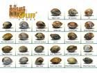 buy cannabis seeds - Blog about cannabis seeds