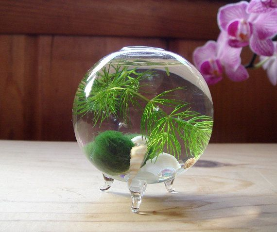 Hey, I found this really awesome Etsy listing at https://www.etsy.com/listing/126017463/zen-micro-orb-marimo-ball
