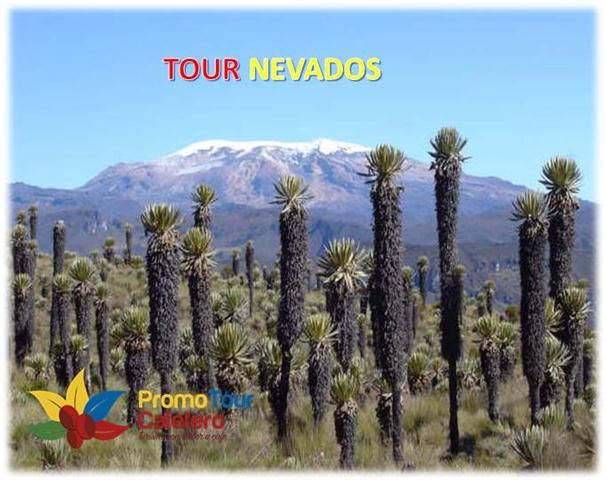 Reserva natural de los Frailejones únicos en los Nevados, Desde Manizales Programas al Nevado Santa Isabel & Nevado del Ruiz Reservas Cel 321 8020524 PBX (096)7355780 WhatsApp 3162218052 Armenia