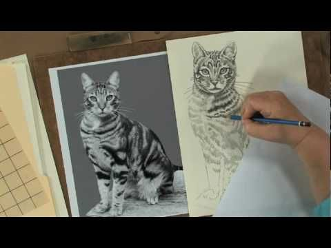▶ Keys to Drawing Realistic Animals with Claudia Nice - YouTube