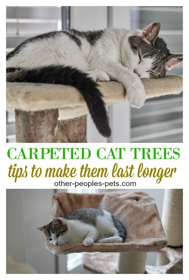 Caring For Carpeted Cat Trees For Large Heavy Cats With Images Cats