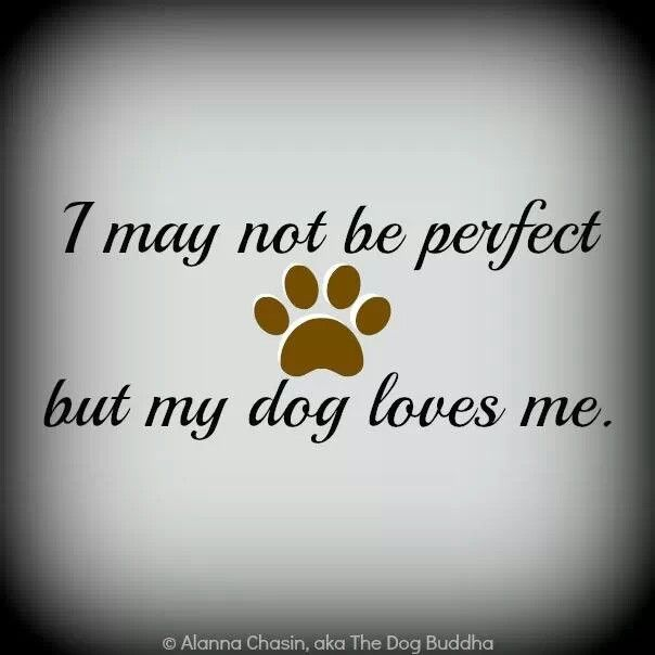 My Dog Loves Me Quotes: Dog Nose Quotes. QuotesGram