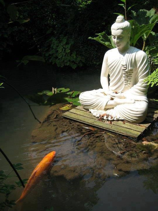 17 best images about mindfulness buddhism for Carp pond design