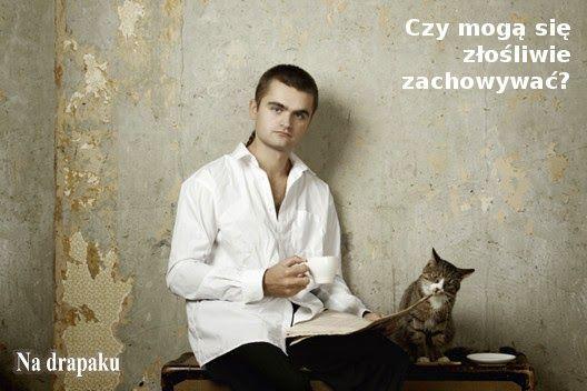 Czy #koty są złośliwe?