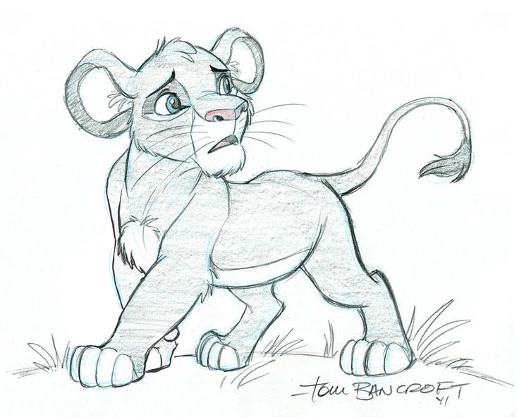 how to draw the side of a lion& 39