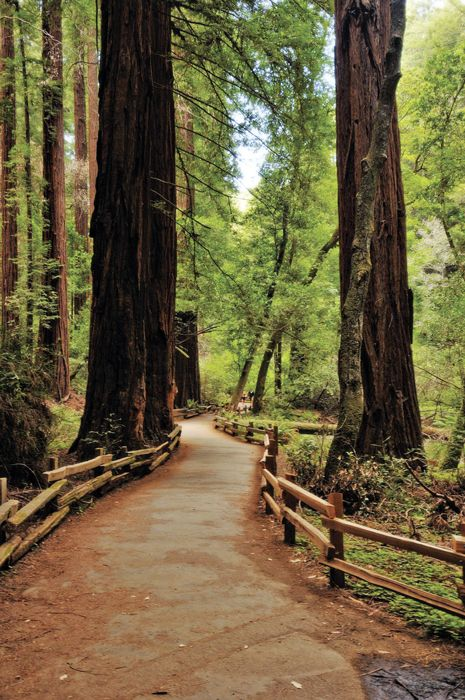 Muir Woods: Go Take A Hike! - Sacramento Magazine - October 2009 - Sacramento, California