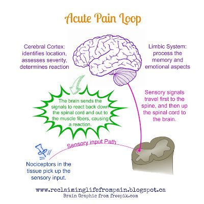 What is Pain? Part Two: The Pain Alarm A great read on what the difference is between acute and chronic pain.