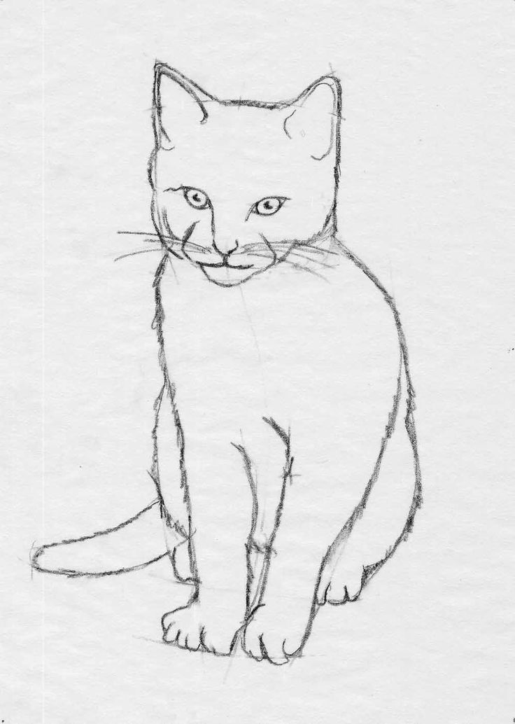 Google Image Result for http://drawcircle.com/images/lesson/cat_drawing_4.jpg