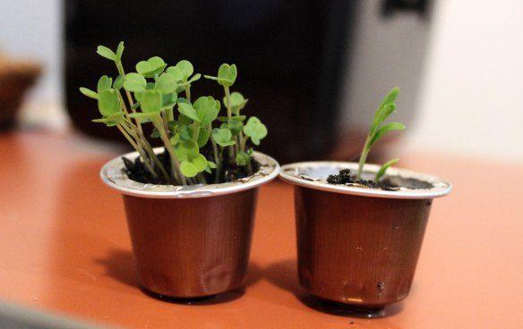 Faça uma sementeira com cápsulas usadas de café nespresso. Passo a passo no blog!