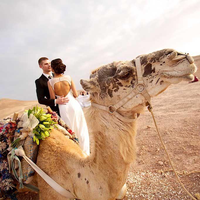 #Свадьба #марокко #пустыня #марракеш #свадебная #церемония #медовый #месяц #годовщина #молодожены #изысканная #марокканская #декор #оформление #элегантная #morocco #marrakesh #wedding #desert #honeymoon #decor #stars #style #vip #elegant #lodge #diner  #декорирование #decoration #venue #camel #прогулка #верблюды