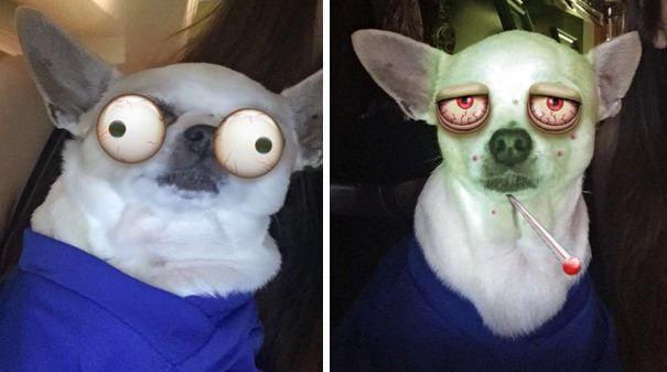 filtros-snapchat-mascotas-animales-11