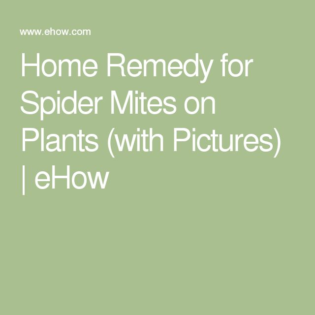 Home Remedy for Spider Mites on Plants (with Pictures) | eHow