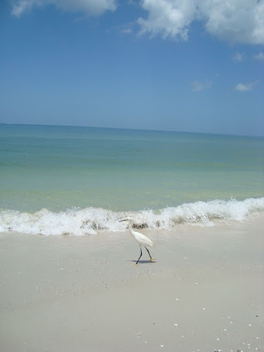 Naples, Florida- Love love love this beach, super clean and just beautiful! Stayed here several times in Naples and will go back! My family visits often when they are in Florida!