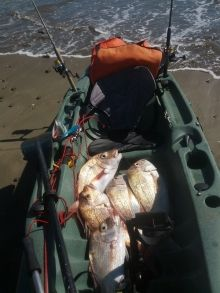 Auckland Snapper caught kayak fishing
