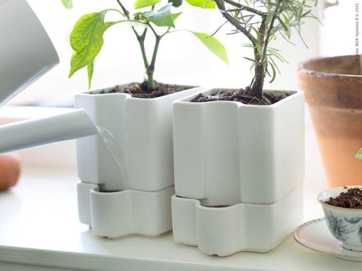 Garden Ideas Ikea 884 best ikea plants images on pinterest | plants, ikea ideas and