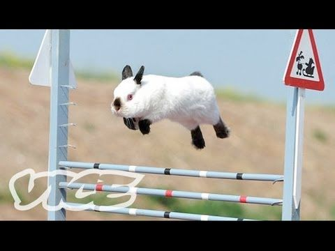 ▶ Cute Bunny Jumping Competition! - YouTube