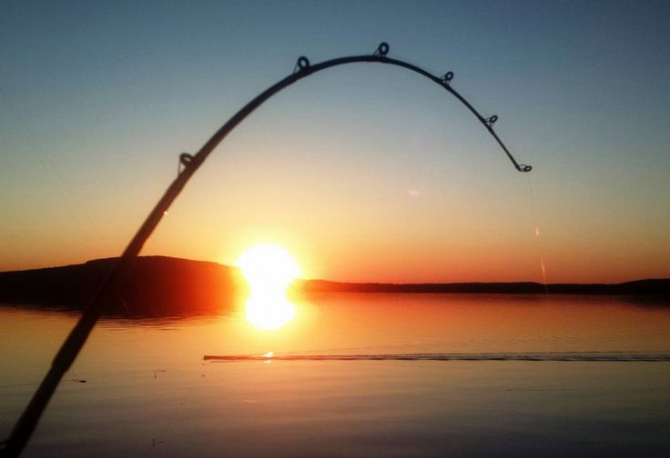 A fishing rod bending in Midnight Sun trolling on Lake Miekojärvi in Pello in Lapland
