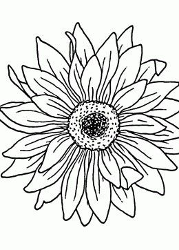 sunflower coloring page for kids flower coloring pages printables free - Detailed Sunflower Coloring Pages