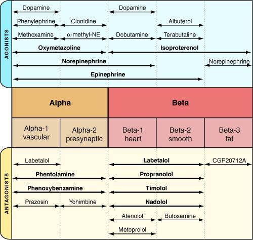 62 best Pharmacology images on Pinterest Nursing schools - drug classification chart