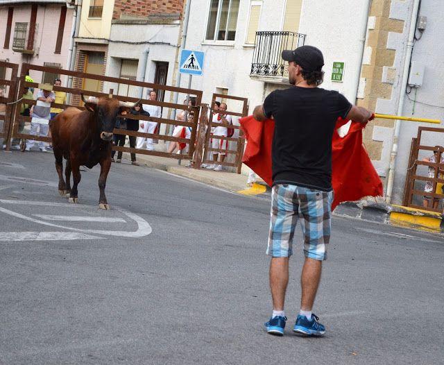Santacara: Vacas Hermanos Ganuza de Artajona - (4)