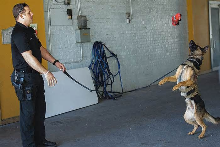 """Fundraiser takes aim at medical costs for retired K-9s There are some expenses that are incurred."""" A fundraiser on Saturday at Main Street Pet Care Inc., a Joplin veterinary clinic, sought to fill the gap. With the money raised at this event and earlier installments, Main Street Pet Care provides basic ..."""