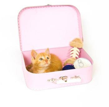 ASPCA Pet Health Insurance Plans Help You Travel Safely with Your Pet this Holiday Season | aspcapetinsurance.com