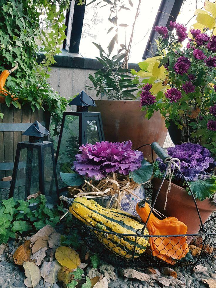 Herbstdeko mit Zierkohl, Kürbissen & Chrysanthemen. Farbtupfer auf die Terrasse zaubern... von wegen grauer November. Da kann auch das Herbstlaub liegen bleiben ;-)