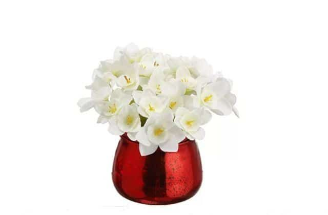 The Narcissus plant and flowers are a common holiday flower because of their pure white blooms. These flowers look fantastic in a vase that is decorated for the holidays or even as part of a grander arrangement that is to be given to someone extra special. These flowers may be a bit harder to find depending on your location, but most floral stores should be able to order them for you.