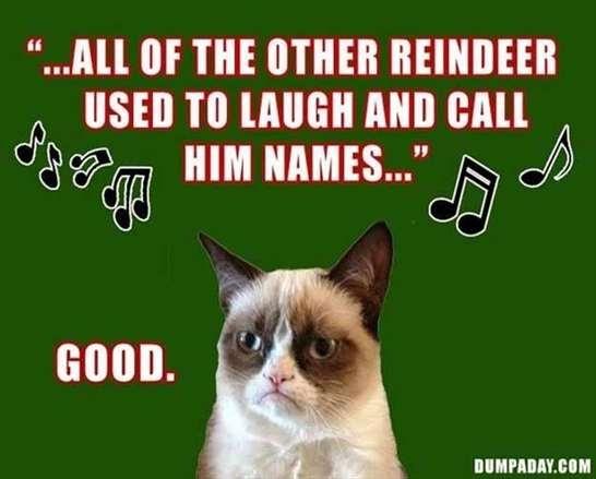 Anche a Natale un meme con i gatti!