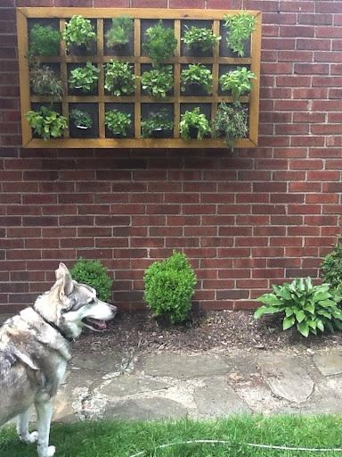 Ron made me a Vertical Herb Garden!