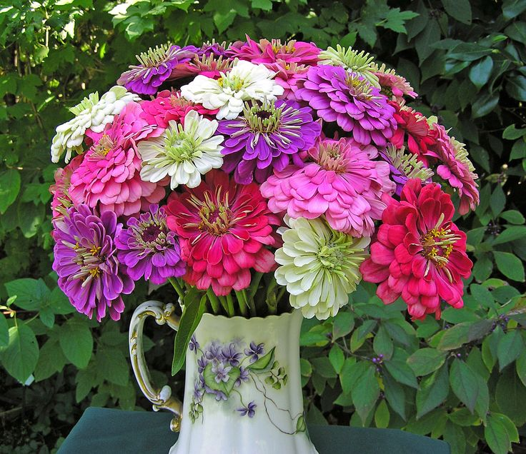 17 Best Images About Zinnias On Pinterest Gardens Warm