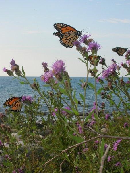 Beautiful butterflies and Lake Huron