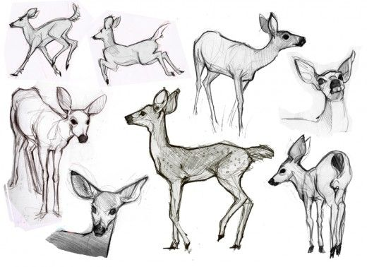 Character Design Tips And Tricks : Best images about creature design deer on pinterest
