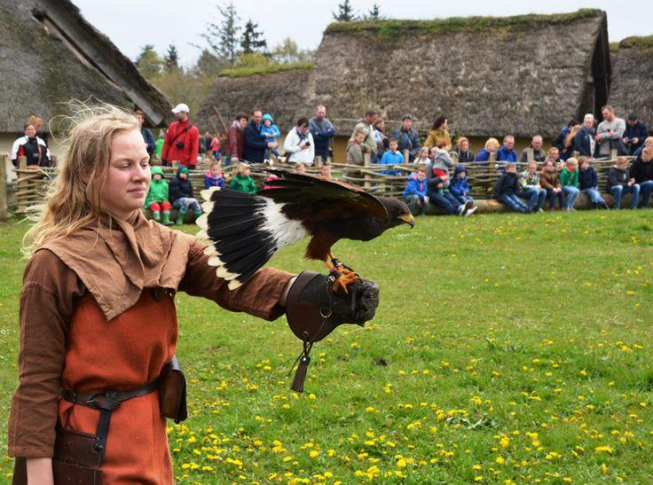 Ribe Vikingecenter roofvogels