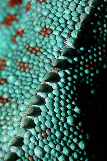 Chameleon skin - this would be a gorgeous embellishment & the story of inspiration it delightful! How do they do it? Oh Nature, you get me every time.