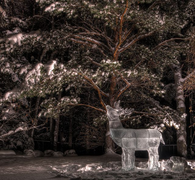 Ice deer at Devonian Botanic Garden. Photo by Dan Hanson