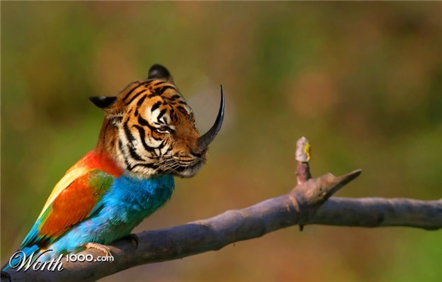 rino tiger bird worth1000com images or other photoshop