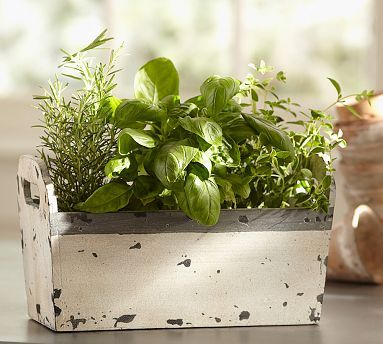 Live Herb Garden #potterybarn  This would make the PERFECT centerpiece on my kitchen table, plus practical and easy access to cook with.