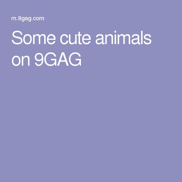 Some cute animals on 9GAG
