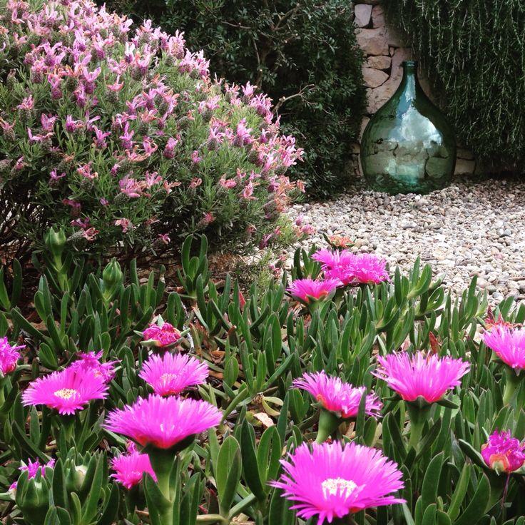 #giardino #hobby #love #fiori #tuttofiorito #primavera #noci #osservare #natura #home #damigiane