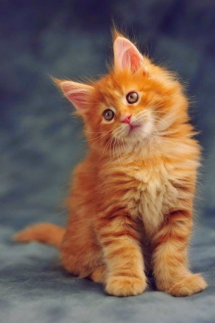 Cute kitty in our favorite color! #Orange